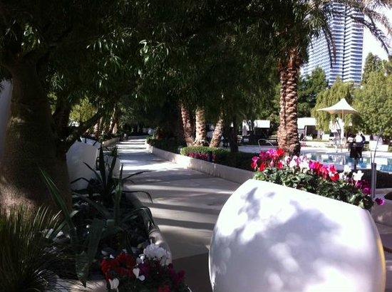 ARIA Resort & Casino: Pool