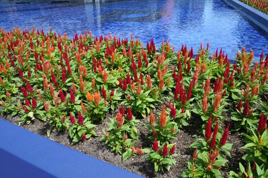 Epcot: Flower display