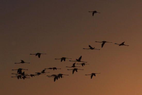 Mas de la Fouque : Des flamands photographiés tôt le matin depuis le sentier découverte du mas