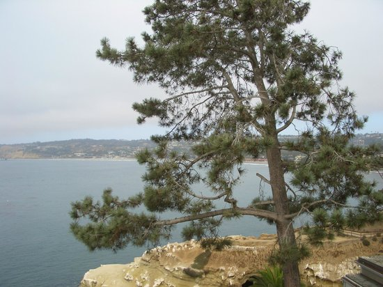 Coastal San Diego Tours to La Jolla & Torrey Pines with TourGuideTim: Torrey Pines coastline