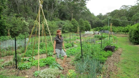 Songbirds Rainforest Retreat: Songbird secret ingredient - magic Veggie Garden