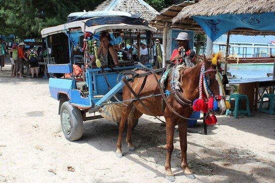 Manta Dive Gili Air Resort: Transport! No Motorised vehicles allowed!!