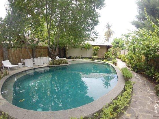 Manta Dive Gili Air Resort: Waterfront Pool