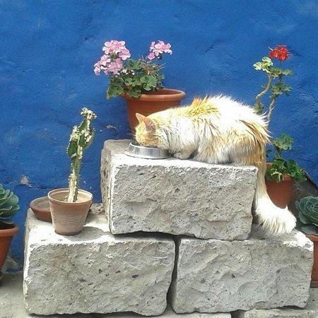 Flying Dog Hostel Arequipa: Una de las mascotas!