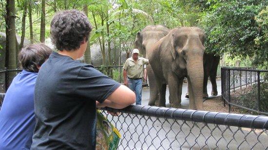 Australia Zoo: my Grandsons loving the elephants 2012