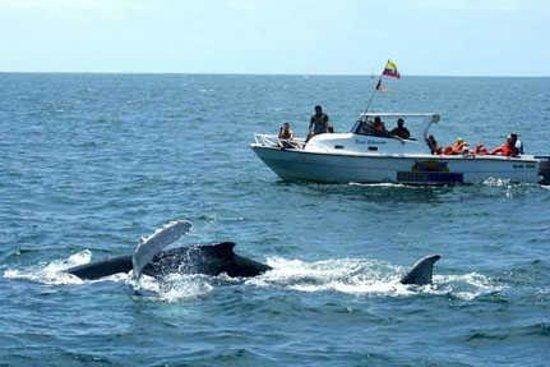 Hotel Euskal: tur de ballenas jorobadas