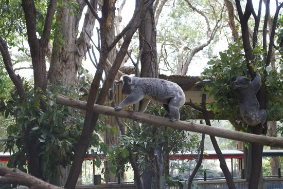 Currumbin Wildlife Sanctuary : lots of animal species visiting the park