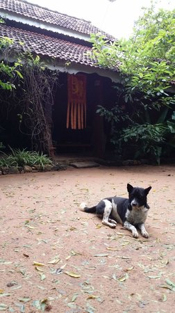 Gem River Edge - Eco Home and Safari: the dogs are friendly!