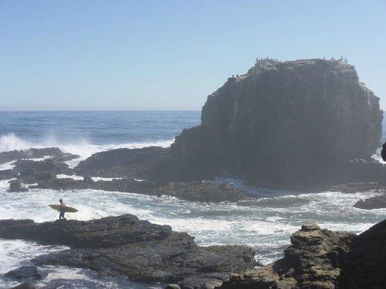 Buena Vista Cabanas : A short bike ride to Punta de Lobos