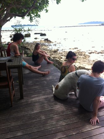 Turtle Bay Lodge : hanging out by the water with the friendly resort dogs
