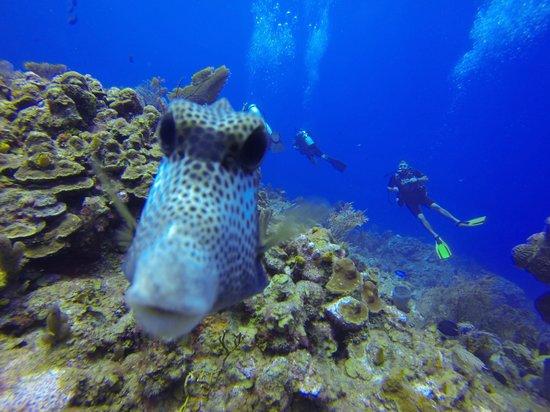 Anthony's Key Resort: Diving