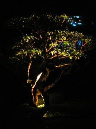 Ceylon Tea Trails: Night-time lighting of a tree in the garden