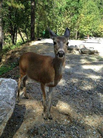 Salt Creek Resort & RV: Our Deer Friend