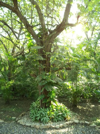 Makanas: Beautiful flora and fauna