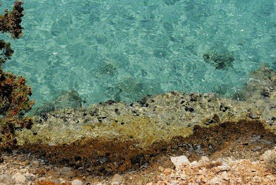 Istro Beach: ежики