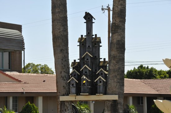 Hacienda Motel Yuma: A Hotel for the Birds!!!