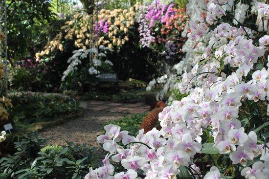 Royal Park Rajapruek: la maison des orchidées