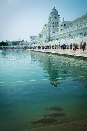 Amritsar Heritage Walk: Озеро вокруг храма.