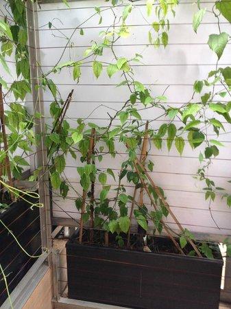 Naumi Liora: Porch with no view