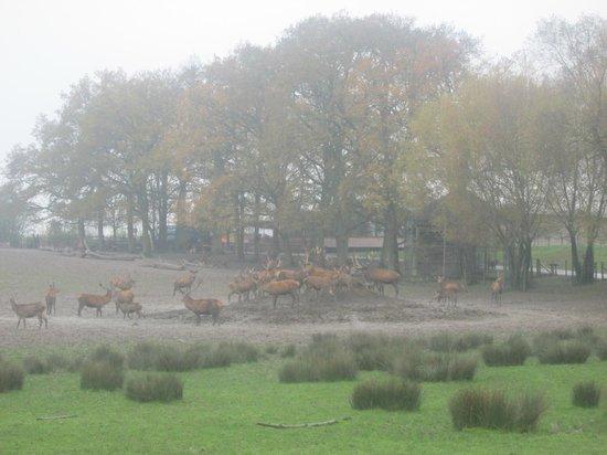 Parc Animalier de Sainte-Croix - Hébergements : parc