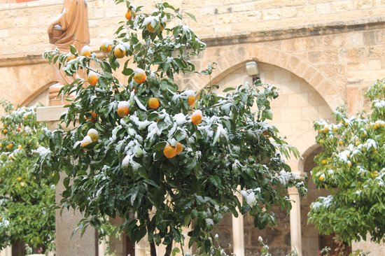 Green Olive Tours: The snow in Bethlehem