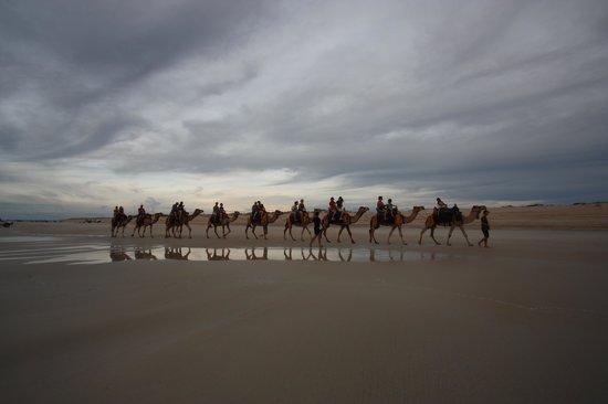 Ships of the Desert : sunset camel ride