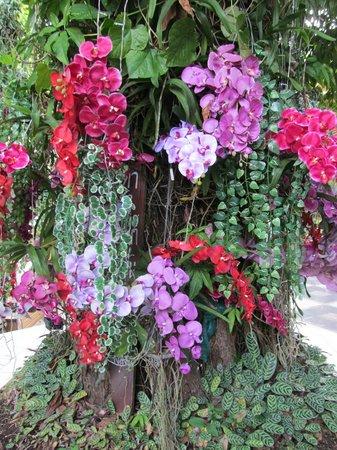 Holiday Garden Hotel: jardin