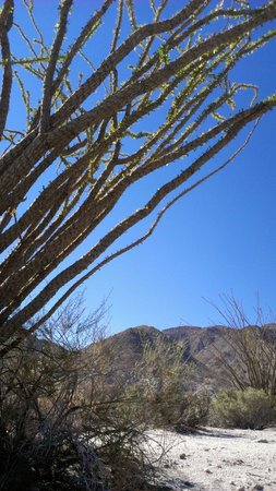 Agua Caliente County Park Campground : Hiking