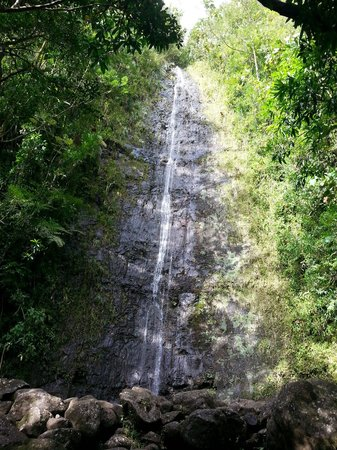 Manoa Falls: Bottom of the falls
