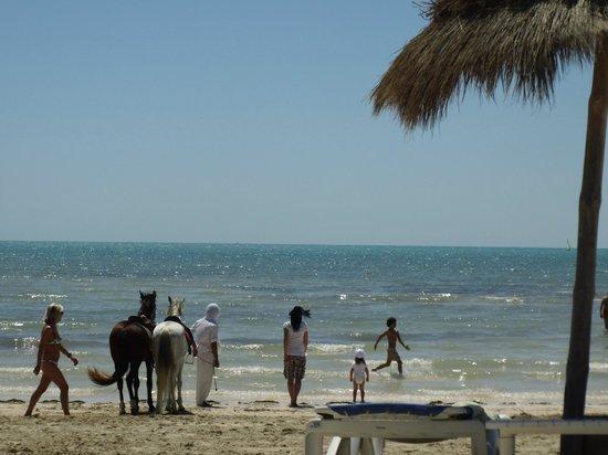 Club Med Djerba la Douce : La plage