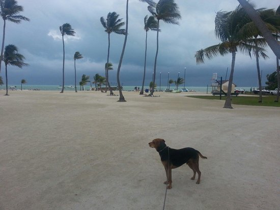 Islander Resort, a Guy Harvey Outpost: My boy Dodge lovin the ocean breeze!