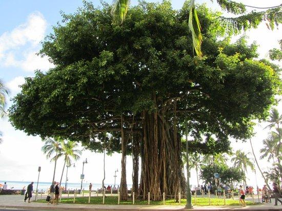 waikiki hindu singles Hawaii magazine covers restaurants, beaches, food, hikes, activities, events, luau and hawaiian cultural stories that exemplify the hawaiian islands.