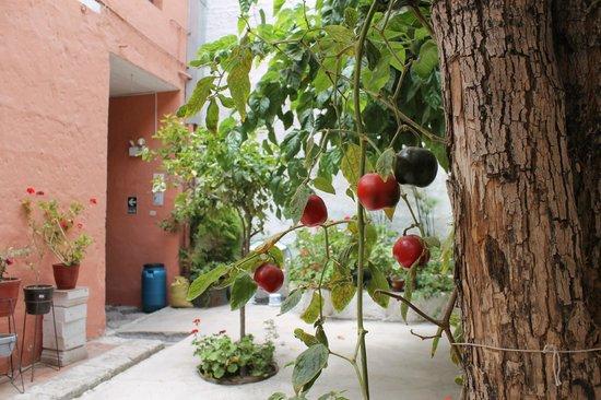 Posada Nueva España: Wonderful things growing in the courtyard