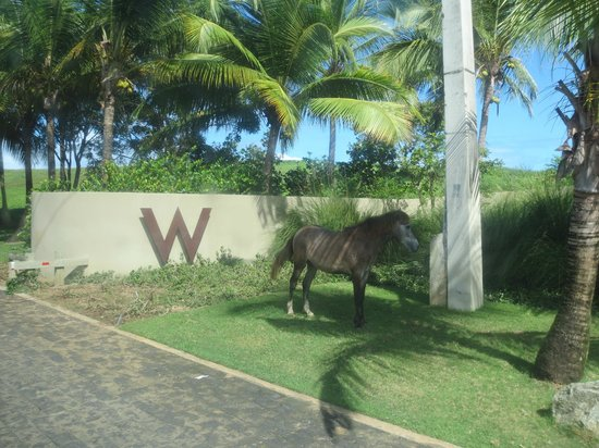 Main Entrance W Horse Picture Of W Retreat Spa
