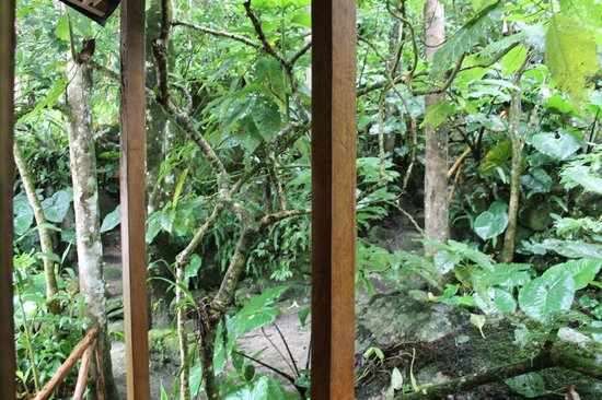 Rupa Wasi  Lodge : Outside the door