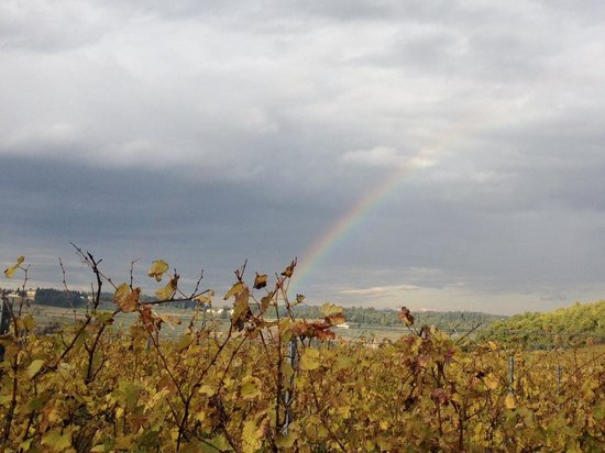 Tuscan Wine Tours - Day Tours: Rainbow over Fattoria Corzano e Paterno winery