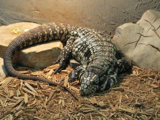 Reptilia Zoo and Education Centre: Reptilia.