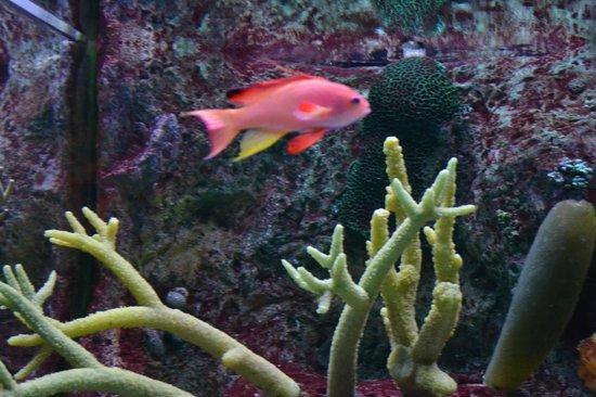 Shedd Aquarium: reef