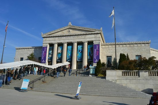 Shedd Aquarium: Get there early or wait in line!
