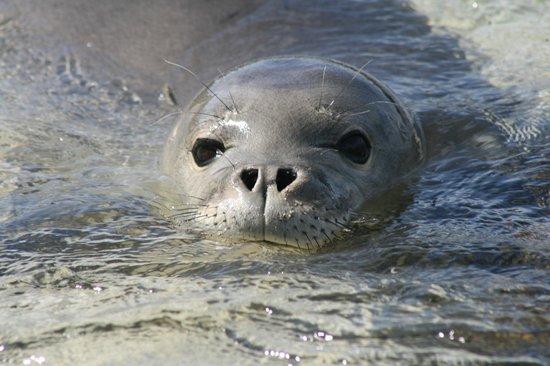 Owen's Retreat : Baby monk seal