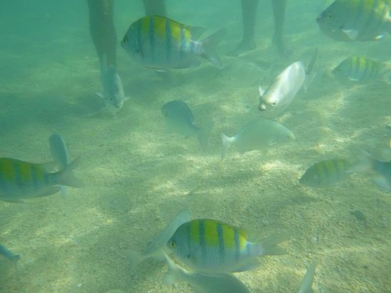 Holiday Inn Resort Los Cabos All-Inclusive: Fantastic snorkeling in Chileno Bay beach, about 15 mins drive from the hotel