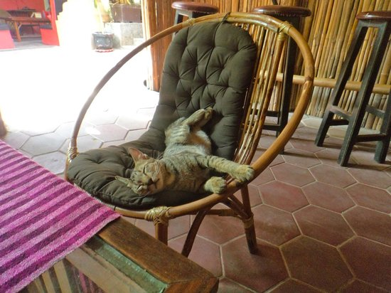 Babel Guesthouse: One of the cats relaxing in the garden :)