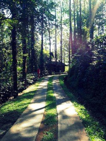 Yavakapadi Village, India: The pathway