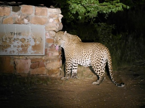 The Outpost: Leopard am Hinweisschild zur Lodge