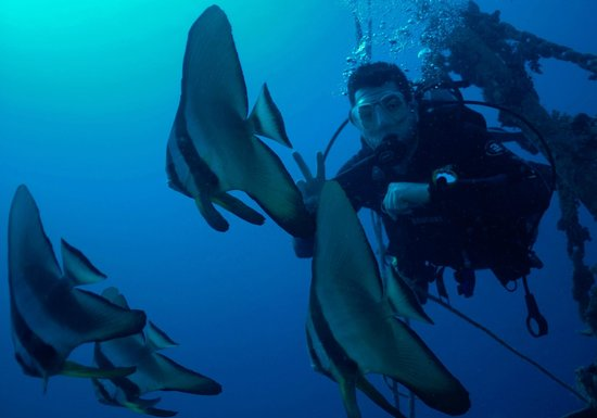 Ilios Dive Club: Fledermausfische an der El Mina