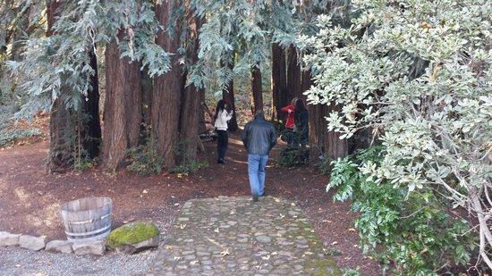Reverie Winery: Beautiful Redwoods