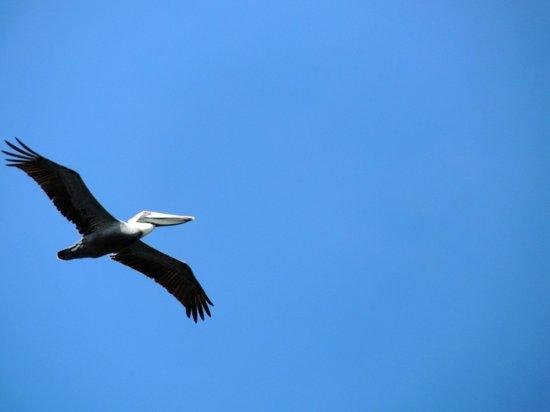 Laguna de la Restinga: per gli appassionati di foto lo scatto è garantito!