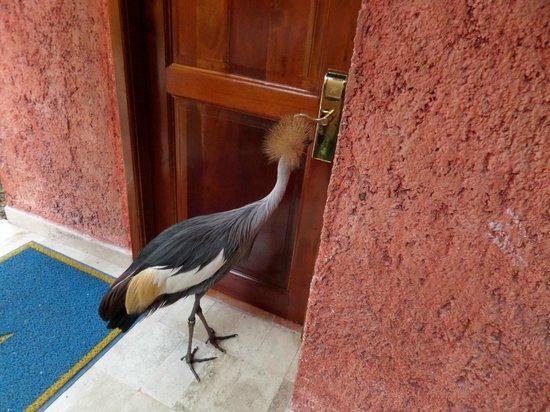 Iberostar Quetzal Playacar: Bird looking at it's reflection
