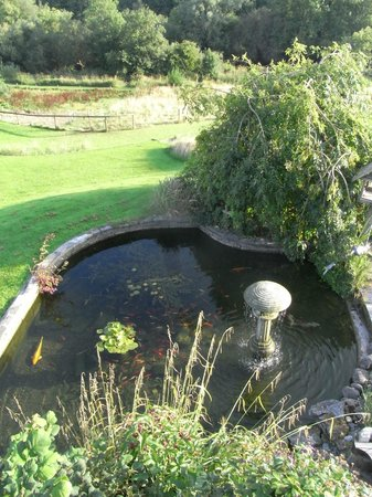 Lawcus Farm Guest House : Fish pond view from balcony of the bedroom I had