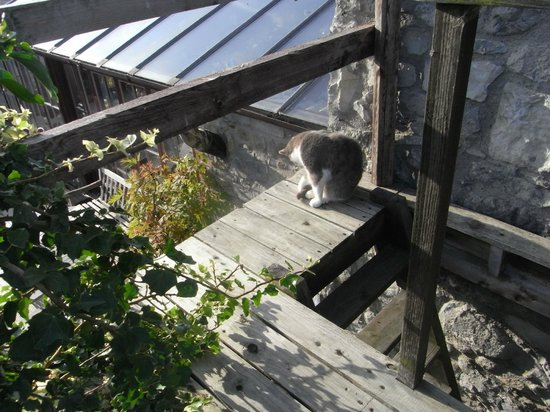 Lawcus Farm Guest House : Morning light on the kitty on the balcony of the room overlooking the pond